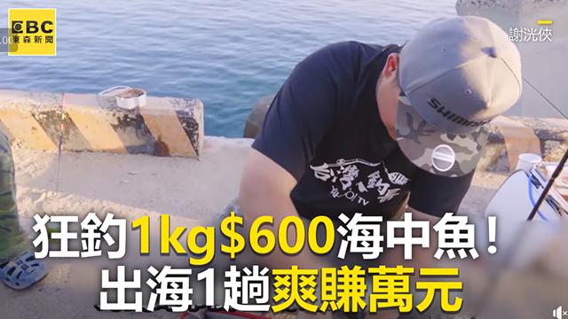 狂釣1kg$600海中魚!出海1趟爽賺萬元