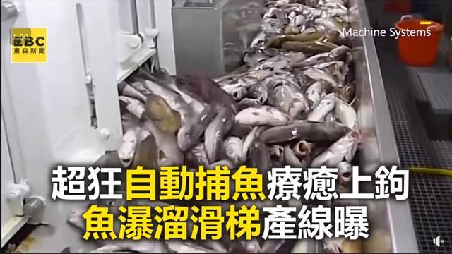 超狂自動捕魚療癒上鉤 魚瀑溜滑梯產線曝
