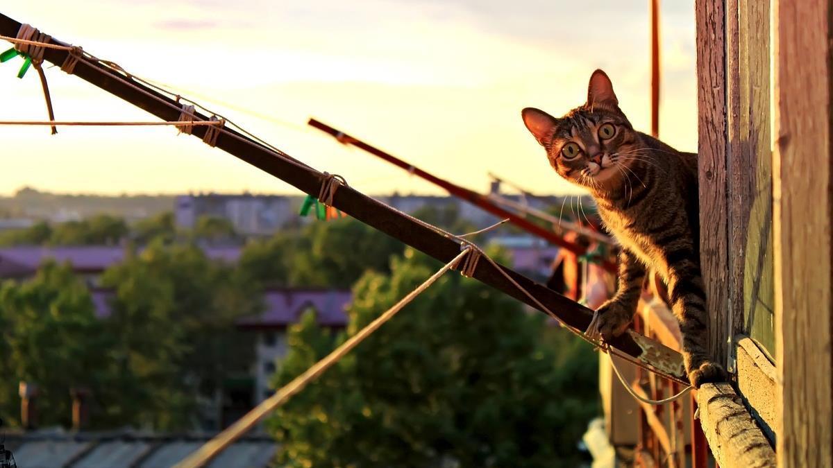 貓才是親生的?老婦為救愛貓 竟用繩從5樓垂降7歲孫