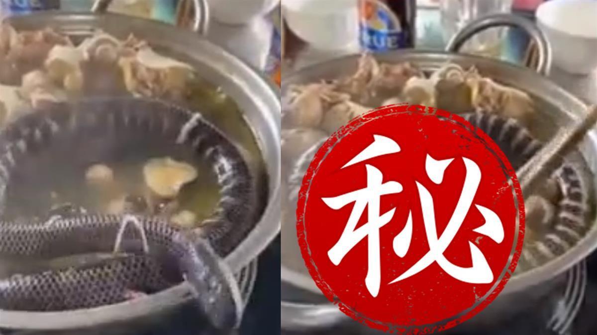 幼蛇被丟滾燙火鍋!瘋狂扭動想逃…下秒筷子壓頭煮熟