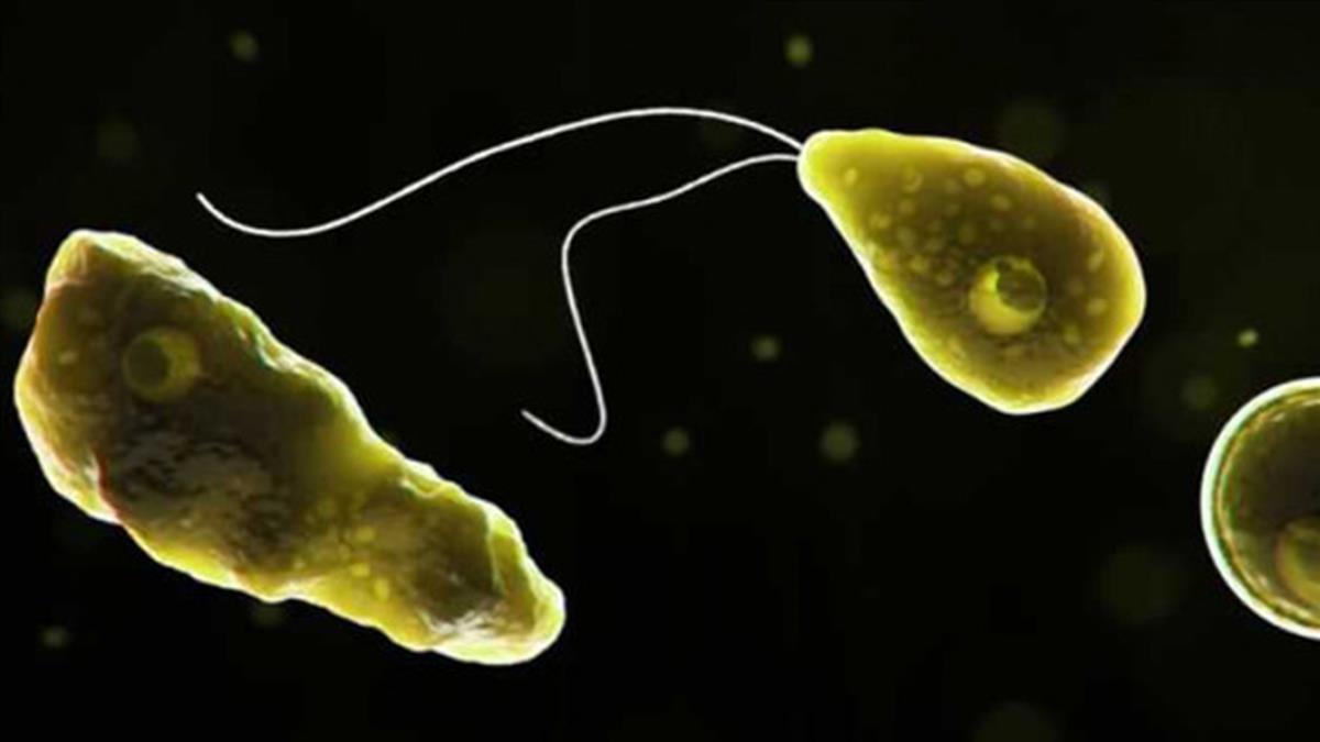 恐怖「食腦蟲」從鼻腔入侵 致死率97%!