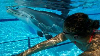 機器海豚「跟真的一樣」! 身價7億要讓所有動物都失業