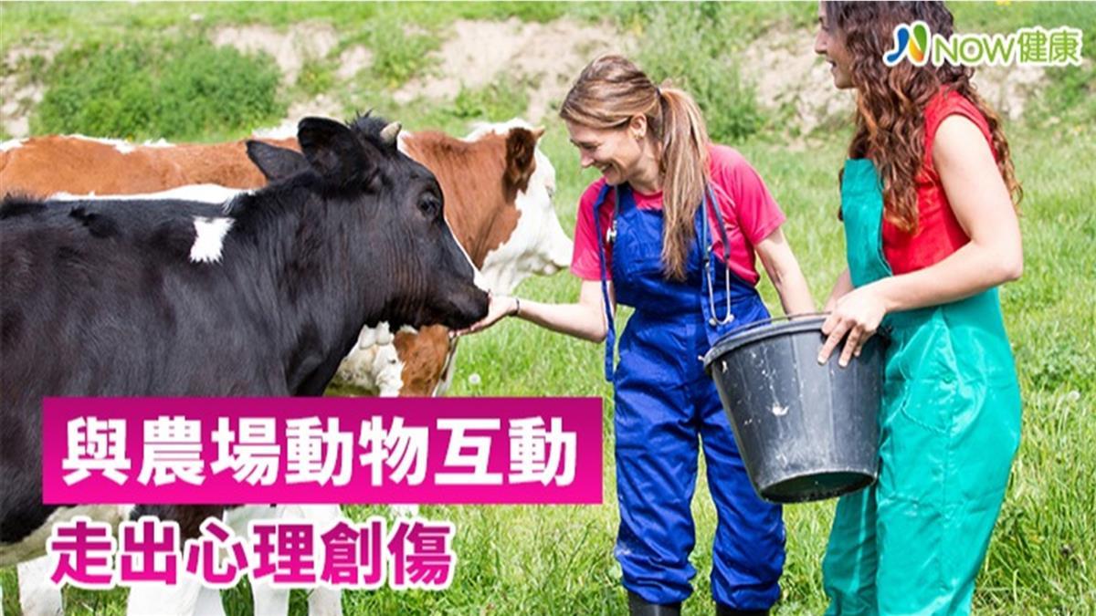 跟乳牛講秘密!英國農場療癒互動 治療青少年心理創傷